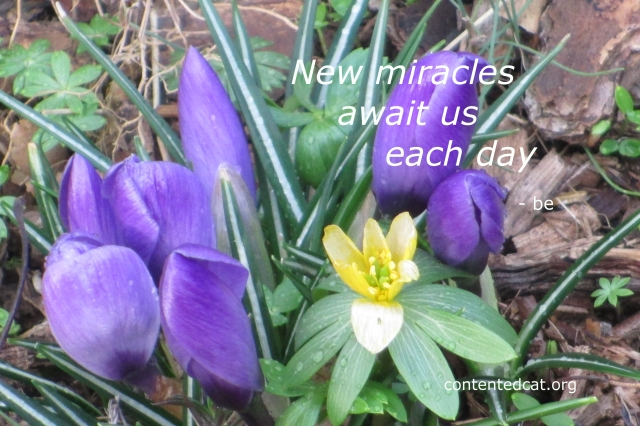 newmiracles